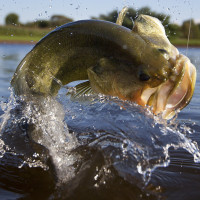 Tips for Late Summer Fishing